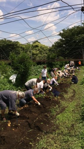 令和二年春 ジャガイモ掘り 3